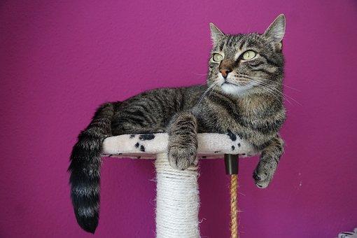 Un chat sur son perchoir en train d'observer